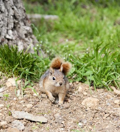 nibbling: Squirrel