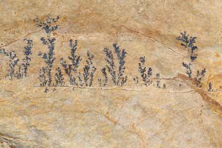 petrified fossil: Fossil plant background
