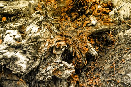 creative old tree root of in the forest  Stock Photo