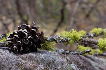 creative arrangement with pine cone and branch on the stone 3 photo