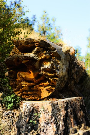 rend: magically broken notched tree log 2 Stock Photo