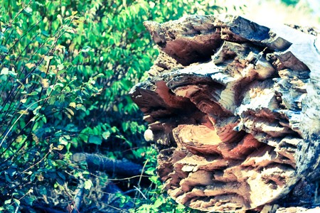 notched: magically broken notched tree log 1
