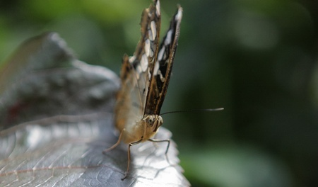 close up photo of a beautiful butterfly photo