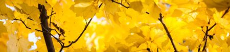 autumn gold, red and yellow leaves, fall photo