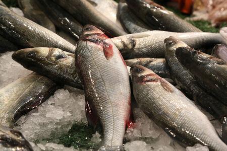 魚市場で新鮮な魚シーバス 写真素材