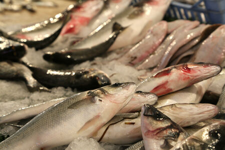 safest: Fresh fished fish at the fish market Stock Photo