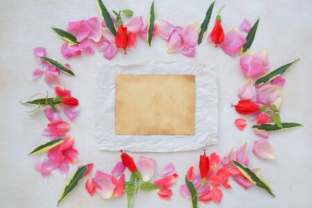 Flowers composition - background. Free space for a text. photo