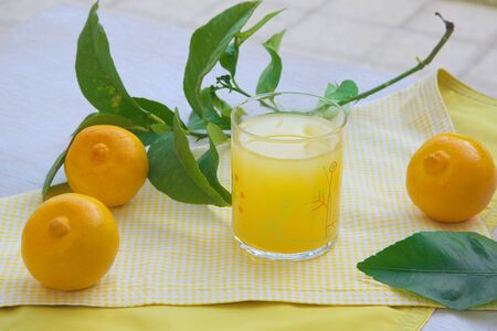 A glass of fresh bergamot juice on a yellow table cloth. Fresh bergamot fruits in the background photo