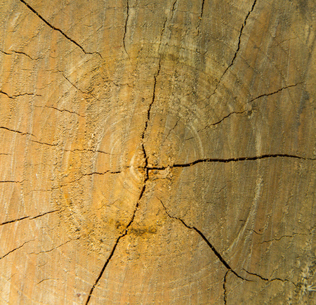the transverse: Transverse section of tree trunk. Background