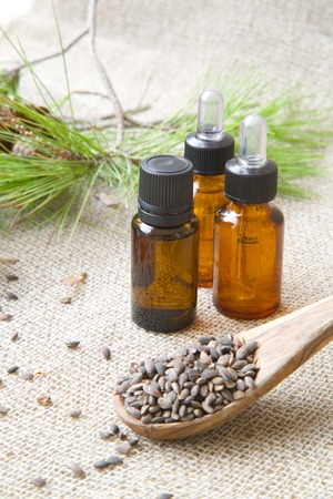 pine kernels: Aleppo pine essential oil. Aleppo pine kernels in the background. Stock Photo