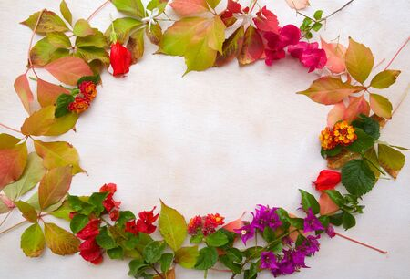 free space: Flower composition in the form of a circle on a white surface. Free space for a text Stock Photo