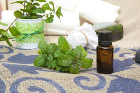 A dropper bottle of peppermint essential oil. Fresh peppermint leaves in the background Stock Photo