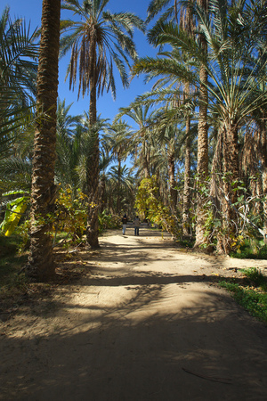 sholders: Two men and a baby are walking in an Tunisian oasis in Toseur