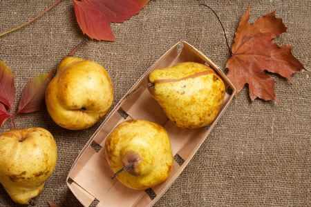 carotenoid: Yellow pears in a wooden basket and maple leaves on a sackcloth. Top view.Close up