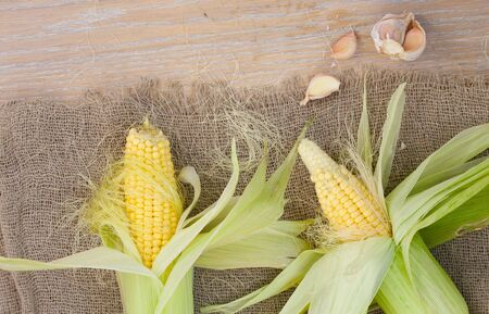 carotenoid: Fresh picked up corn cobs and cloves of garlic on a sackcloth Stock Photo