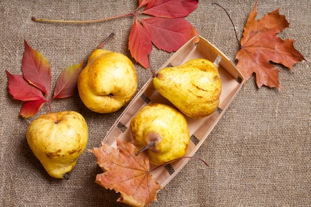 carotenoid: Yellow pears in a wooden basket and maple leaves on a sackcloth