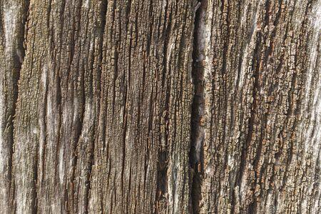 古い木の樹皮。背景。 写真素材