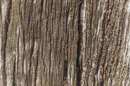 Old tree bark. Background.