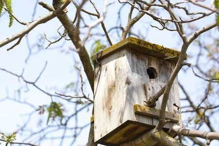 walnut tree: Old wooden birds house covered by moos.It is placed on a walnut tree. Early spring