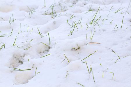 precipitaci�n: la hierba verde mirando hacia fuera de la capa de nieve