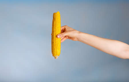 Hand with a corn cob on a blue background. Closeup