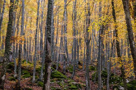 Tejeda de Tosande. Fuentes Carrionas Natural Park, Fuente Cobre- Palentina Mountain. Palencia, Spain Stock Photo