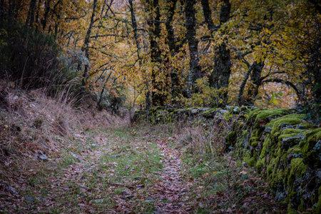 Pardomino Forest, Picos de Europa Regional Park, Boñar, Castilla-Leon, Spain