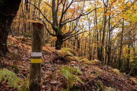 Pardomino Forest, Picos de Europa Regional Park, Boñar, Castilla-Leon, Spain Stock Photo