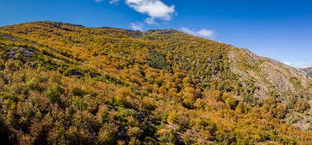 beech of Tejera Negra, Sierra Norte de Guadalajara Natural Park, Cantalojas, Guadalajara, Spain