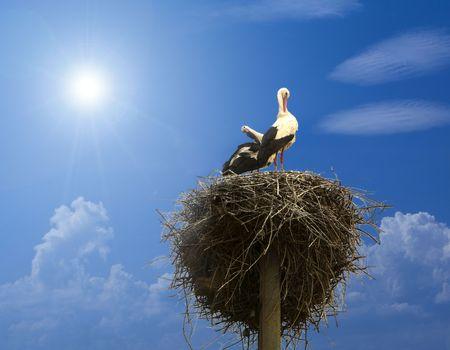 stork family in the nest under blue sky Stock Photo - 5028347