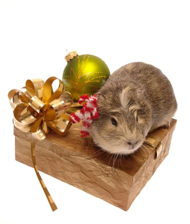 Xmas still-life on white with guinea pig. is not isolated, just shot on white photo