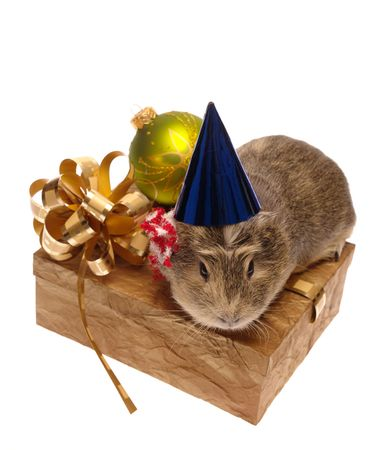 Xmas still-life on white with guinea pig. is not isolated, just shot on white Stock Photo
