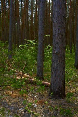 underbrush: in the deep forest, nature landscape