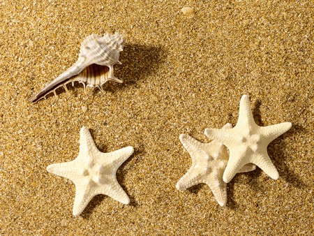 Sea still life over sand. Shellfish and starfish photo