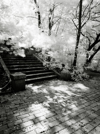scanned: park alley with stairs. scanned infrared film source