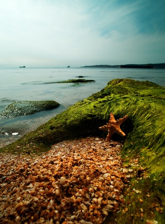 starfish beach: Summer time on the sea. Starfish over sand close to rock Stock Photo