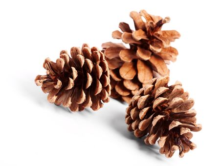 pine three: Pine cones over white background with shadow