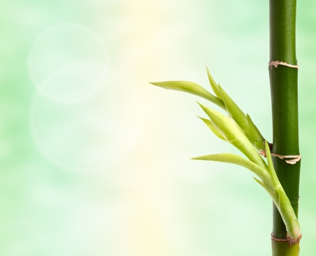 bamboo branch over abstract background photo
