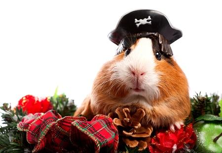 sombrero pirata: Funny Animal. Conejillo de Indias de la Navidad retrato