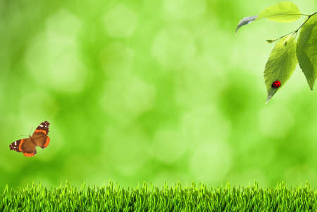 Summer backgrounds with blurry bokeh, grass and butterfly photo