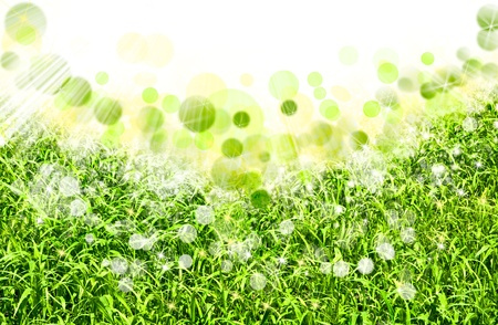 abstract spring backgrounds with defocused bokeh photo