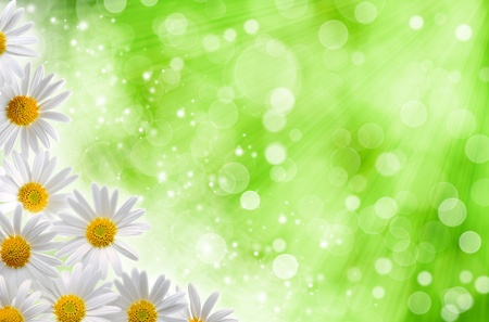 Abstract spring backgrounds with daisy flowers and blured bokeh photo