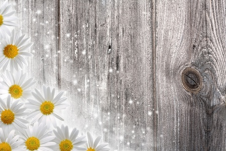 Old wooden desk and daisy flowers, abstract backgrounds Stock Photo - 12882272