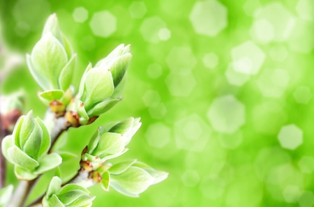 blossomed buds, abstract natural backgrounds with blured bokeh Stock Photo - 13120129