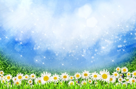 green field with daisy flowers under the sunlight as natural background photo