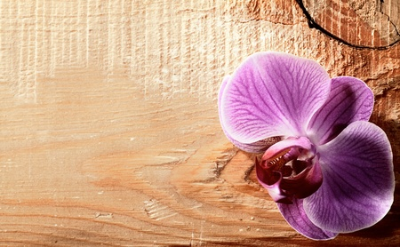 Pink orchid flower over wooden desk photo