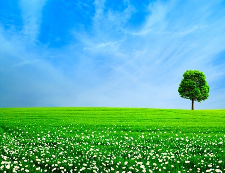 white with daisies: Abstract rural landscape  Green meadow under the blue skies Stock Photo