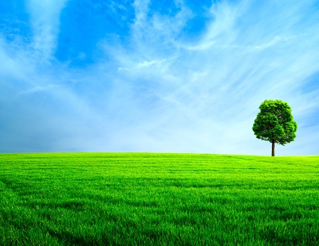 Abstract rural landscape  Green meadow under the blue skies photo