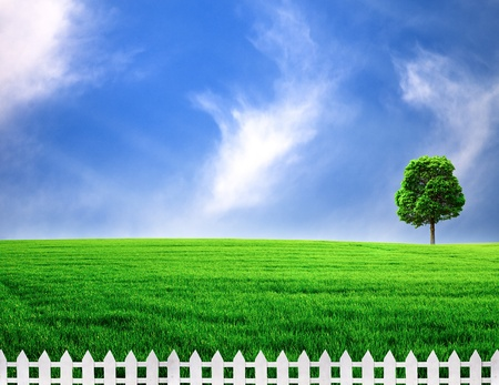 outdoor rural scene with white fence  photo