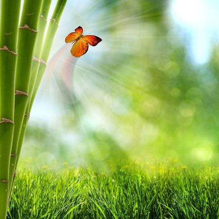 abstract summer backgrounds with bamboo forest and butterfly photo